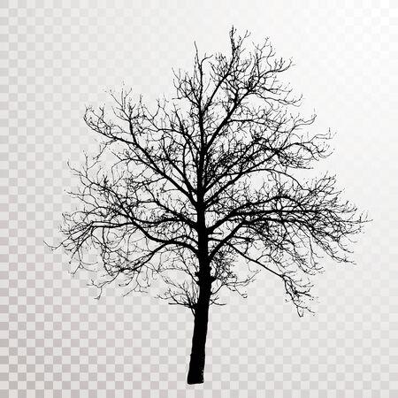 disegno vettoriale del grande albero di noce invernale Vettoriali