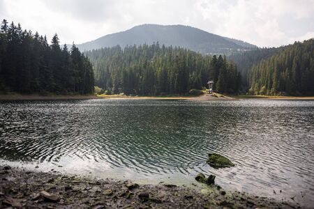 Legendary Synevyr lake in Summer. Unique lake on top of the mountain with tall spruce trees. Ukraine Carpathian Mountains