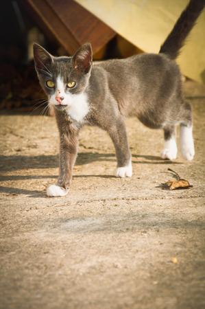 stalking: Small cat stalking Stock Photo