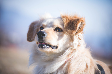 Handicapped dog portrait Stock Photo