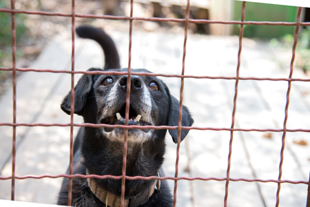 socialization: Abandoned dog who lives behind a iron fence in dogs shelter
