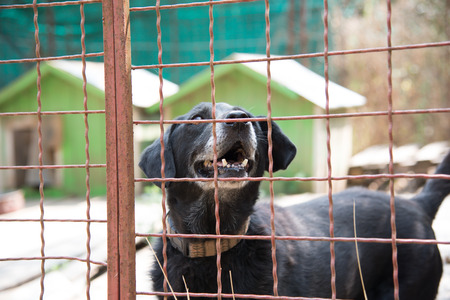 Abandoned dog who lives behind a iron fence in dogs shelter