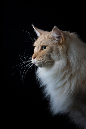 pet photography: Brown white cat looking a side Stock Photo