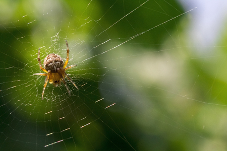 net: Spider and his pray on a green background