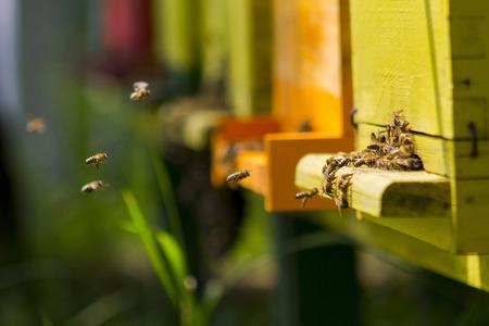 Abeilles dans ruche jaune ruche sur une journée ensoleillée Banque d'images - 85103444