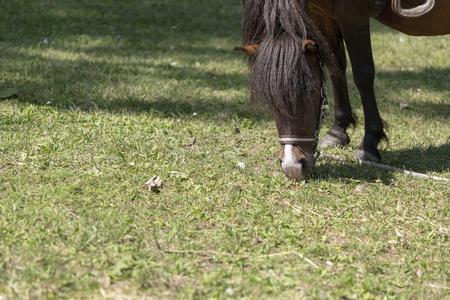 Cavallo affamato che mangia erba in una giornata di sole