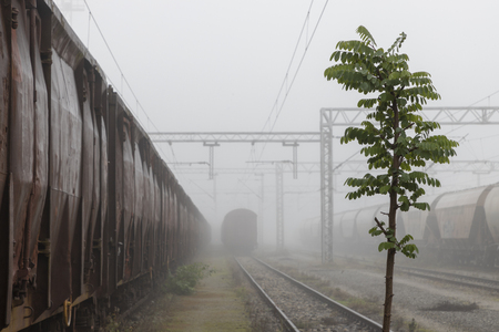 Old train wagons parked in the morning mist
