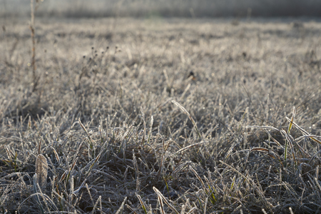 Frozen grass at sunrise in winter Stock Photo - 120219619