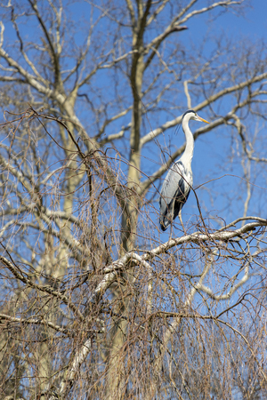 Heron sitting on a tree