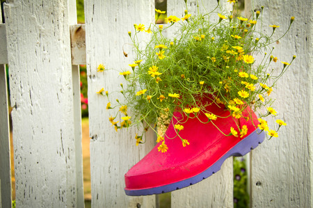 fench: The boot with flower on the fench is beautiful.
