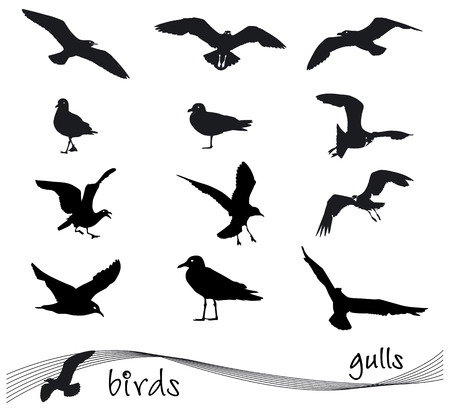 gulls: Vector collection of silhouettes of gulls