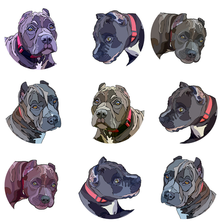 Stickers with pitbulls. Vector illustration, EPS 10