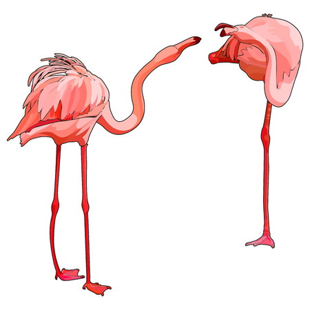 Two flamingos in love, vector illustration
