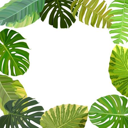 Tropical leaf frame. Vector illustration, EPS 10  イラスト・ベクター素材