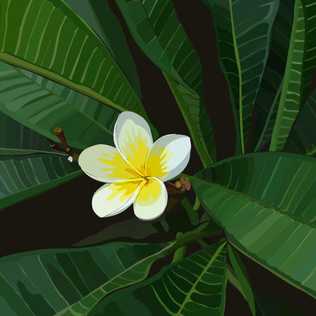 Background with yellow frangipani bunch. Plumeria flower blooming. Vector illustration, EPS 10