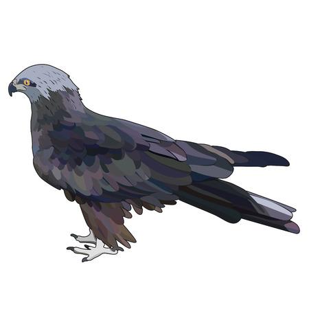 Vector illustration of eagle. EPS 10 Ilustração