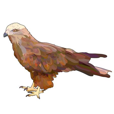 Vector illustration of eagle. EPS 10 Illustration