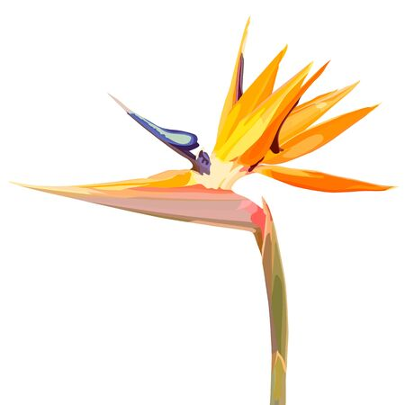 Strelitzia Reginae orange tropical flower bouquets vector set isolated on white. Green leaves, orange and violet blossom design set. South African plant, so called crane flower or bird of paradise. - Vector