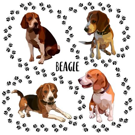 Smooth-haired brown beagle. Vector illustration 일러스트