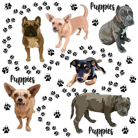 Set of puppies. Vector illustration