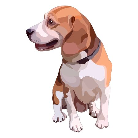 Smooth-haired brown beagle. Vector illustration Stock Illustratie