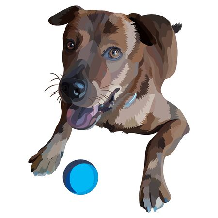 Illustration of dog. Plott Hound. Stock Illustratie