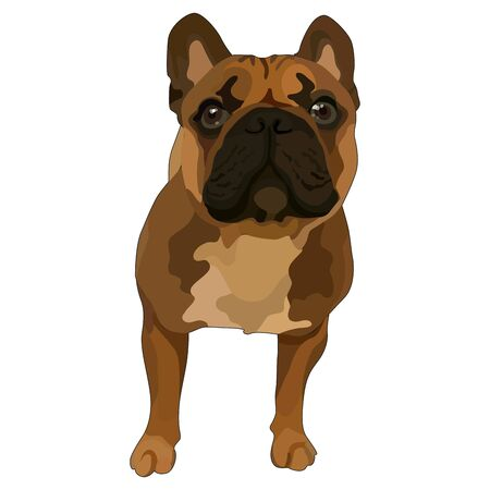 Illustration of puppy of pug. Vector, EPS10