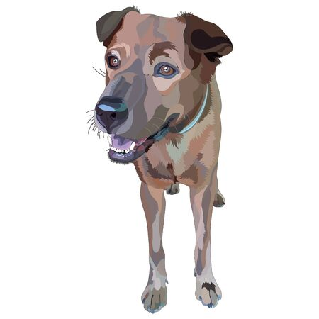 Illustration of dog. Plott Hound. Vector, EPS10