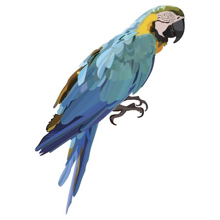 Vector colorful tropical parrot. Ara parrot Vector isolated elements on the white background.