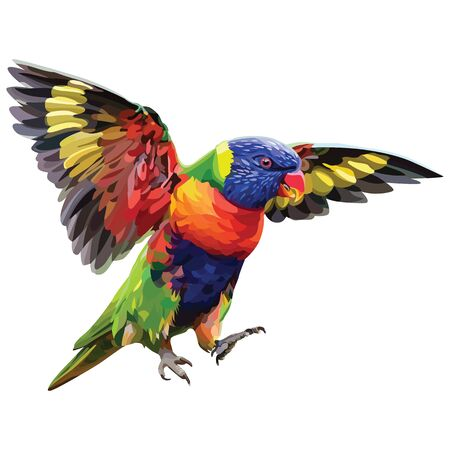 Vector colorful tropical parrot. Loridae parrot. Vector isolated elements on the white background.