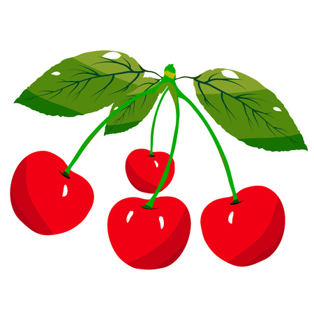 Cherries with a green leaf isolated. Vector illustration