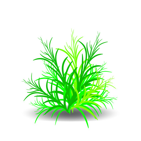 Green bush, cartoon on white background.vector