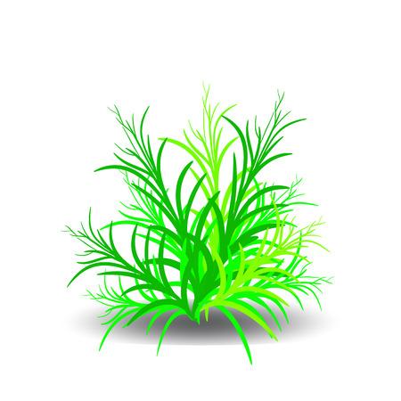 Groene struik, beeldverhaal op witte achtergrond Vector