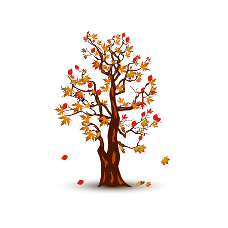 Autumn tree with maple leaves, cartoon on white background.Vector