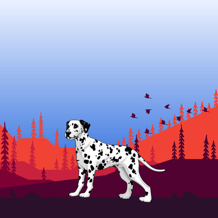 Illustration. Dog pedigree (Dalmatian) on the hunt, cartoon.Vector