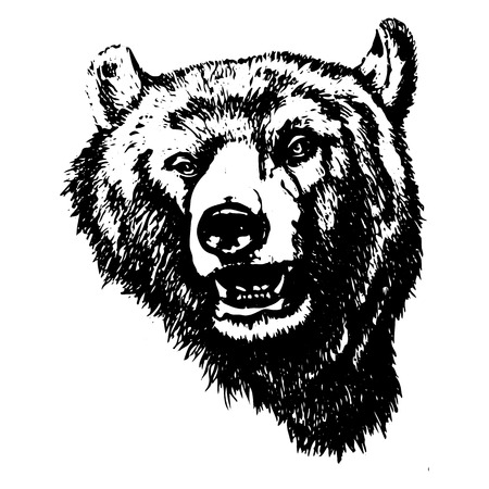 Silhouette of an evil grizzly bear (head), on white background, vector