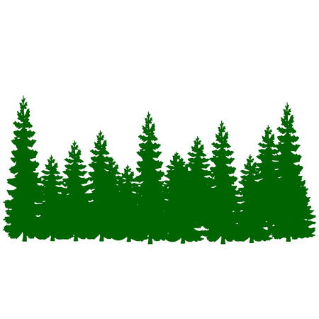 Pine tree forest vector Çizim