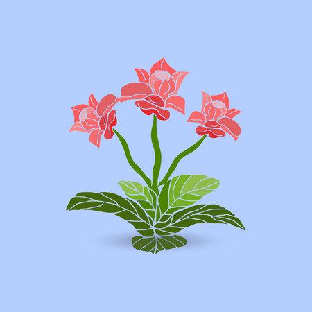 Indoor three stem flower of pink color, on a light blue background, vector