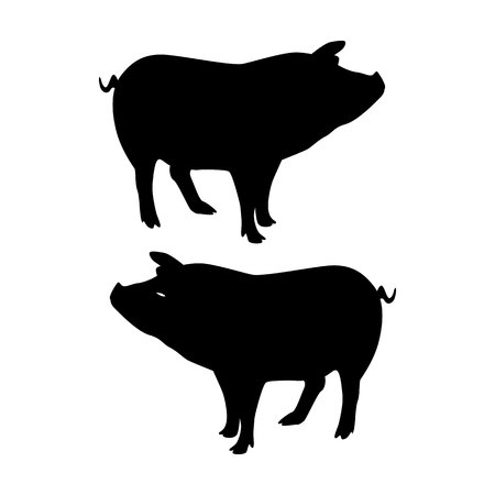 Silhouette Pig, on white background, vector