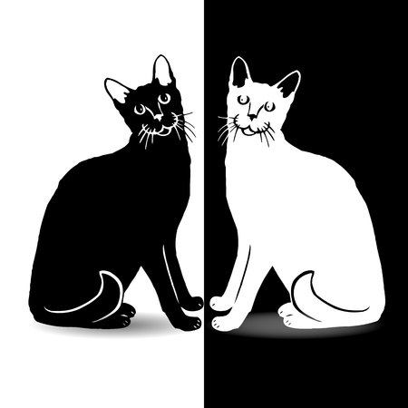 Black and white cat, on white and black background, vector