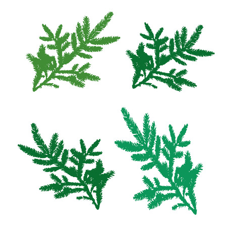 Set of pine branches for design, silhouette on white background, vector