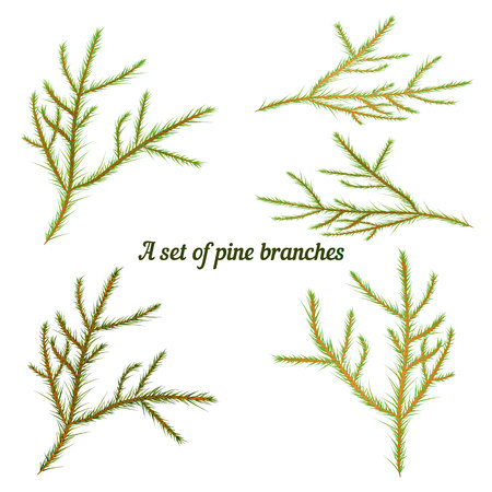 Set of pine branches for decoration for Christmas, on a white background, vector