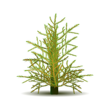 Christmas tree for design, on a white background, vector