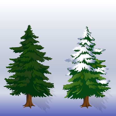 Winter illustration Two Christmas trees in the forest on a light blue background, vector