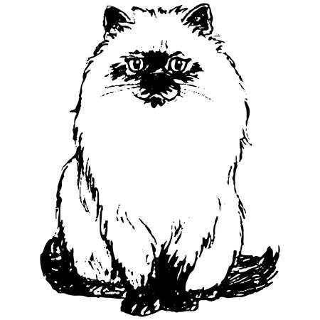 Figure black cat, on a white background, close-up, vector Ilustrace