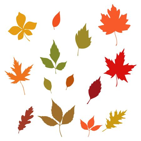 Collection for design autumn leaves on a white background, vector