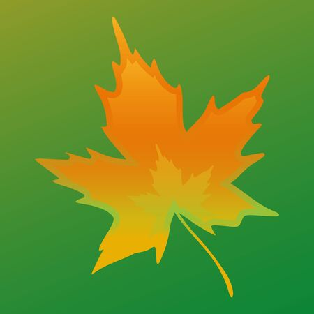 Maple leaf closeup on a green background, vector Ilustração