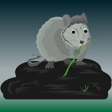 Gray rat at night sits on a large stone near a swamp and nibbles on bamboo, vector Ilustração