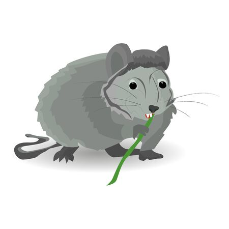 Gray rat sits and nibbles on a bamboo, on a white background, vector