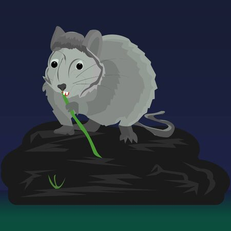 Gray rat at night sits on a large stone near a swamp and nibbles on bamboo Banco de Imagens